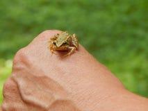 Немногое лягушка сидя в наличии стоковое изображение rf
