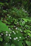 Немногое младенцы цветка стоковая фотография rf