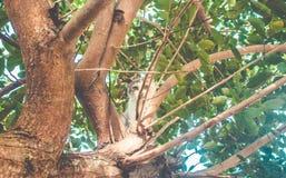 Немногое молодой кот взбираясь на дереве смотря вниз к камере стоковые изображения rf