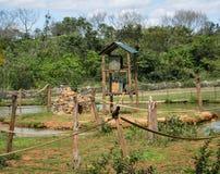 Немногое обезьяна сидя в середине соединений веревочки окруженных водой стоковое изображение