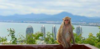 Немногое обезьяны в парке стоковые изображения rf