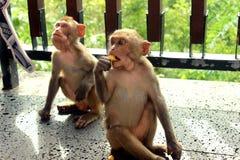 Немногое обезьяны в парке стоковые фотографии rf