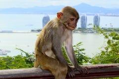 Немногое обезьяны в парке стоковая фотография