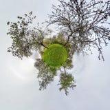 Немногое панорама планеты сферически 360 градусов Сферически вид с воздуха в зацветая саде сада яблока с одуванчиками Погнутость иллюстрация штока