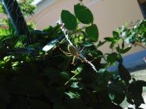 Немногое паук идя вокруг стоковая фотография