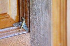 Немногое паук охотится более большая жертва насекомого на двери стоковые изображения