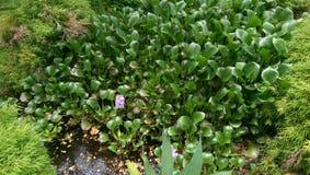 Немногое пруд с пурпурным цветком стоковое фото