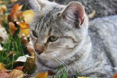 Немногое сладкий кот в саде стоковое изображение rf