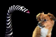 Немногое собака шавки испугано запасая марионетки руки стоковые фото
