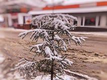 Немногое спрус в снеге на улице города Полдень зимы Люди идут в снежную улицу Лыжный курорт Bakuriani горы стоковые фото
