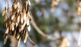 Немногое сухие листья на ветви в парке на предпосылке весны солнечной Стоковое фото RF
