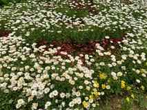 Немногое цветет предпосылка стоковые фото