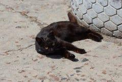 Немногое черный кот лежит и смотрит на серой грязной дороге в улице стоковое фото