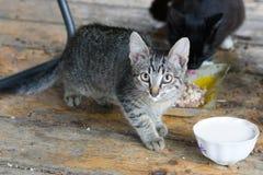 Немногое striped котенок смотрит в объектив фотоаппарата стоковая фотография