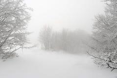 Немногословные ландшафт зимы, смещения снега и ветви стоковая фотография