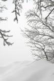 Немногословные ландшафт зимы, смещения снега и ветви стоковое изображение