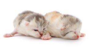 Немного 10 котят дня старых. Стоковые Изображения RF