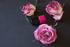 Немножко вянуть розы и маникюр подобного цвета Стоковые Фотографии RF