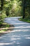 Немножко освещенная дорога в лесе Стоковая Фотография