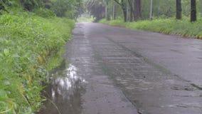 Ненастная дорога леса, Индия сток-видео