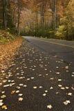 Ненастная дорога горы Стоковые Изображения