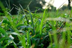Ненастная трава утра стоковое фото rf