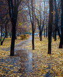 Ненастное утро в парке Стоковые Изображения RF