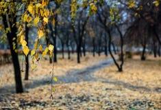 Ненастное утро в парке Стоковые Изображения