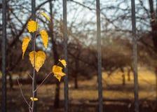 Ненастное утро в парке Стоковое Изображение RF