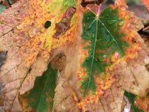 Ненастные листья стоковые изображения rf