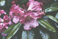 Необходимый дождь Стоковые Фотографии RF