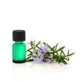 необходимый rosemary масла травы Стоковое Изображение RF