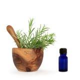 необходимый rosemary масла травы Стоковые Фото