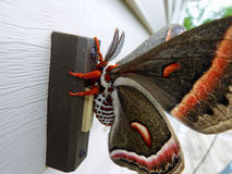 Необыкновенная бабочка Стоковое фото RF