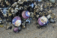 Необыкновенная живая природа на побережье Орегона Стоковая Фотография RF