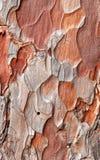 Необыкновенная кора дерева Стоковое Изображение