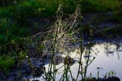 Необыкновенная сеть ` s паука в поле в раннем утре Стоковая Фотография RF