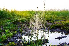 Необыкновенная сеть ` s паука в поле в раннем утре Стоковая Фотография
