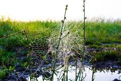 Необыкновенная сеть ` s паука в поле в раннем утре Стоковые Изображения RF