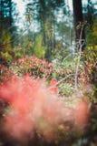 Необыкновенное зеленое растение в древесине Стоковое фото RF