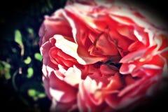 необыкновенное цветастой фантазии предпосылки флористическое стоковые изображения rf