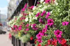 необыкновенное цветастой фантазии предпосылки флористическое Стоковое Фото