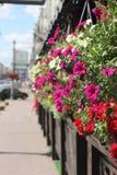 необыкновенное цветастой фантазии предпосылки флористическое Стоковое Изображение RF
