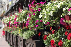 необыкновенное цветастой фантазии предпосылки флористическое Стоковая Фотография