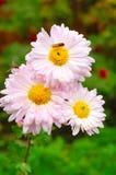 Естественные цветки Стоковая Фотография