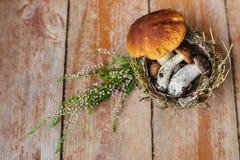 Необыкновенные подарки леса корзины Стоковые Фотографии RF