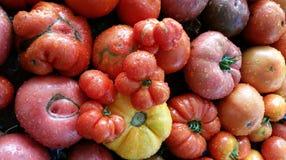 Необыкновенные томаты стоковое изображение rf