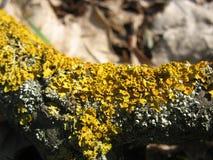 Необыкновенный мох Стоковые Изображения RF