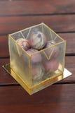Необыкновенный торт в шариках шоколада и кубе карамельки Стоковая Фотография