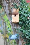 Необыкновенный человек сделал дома птицы Стоковые Изображения